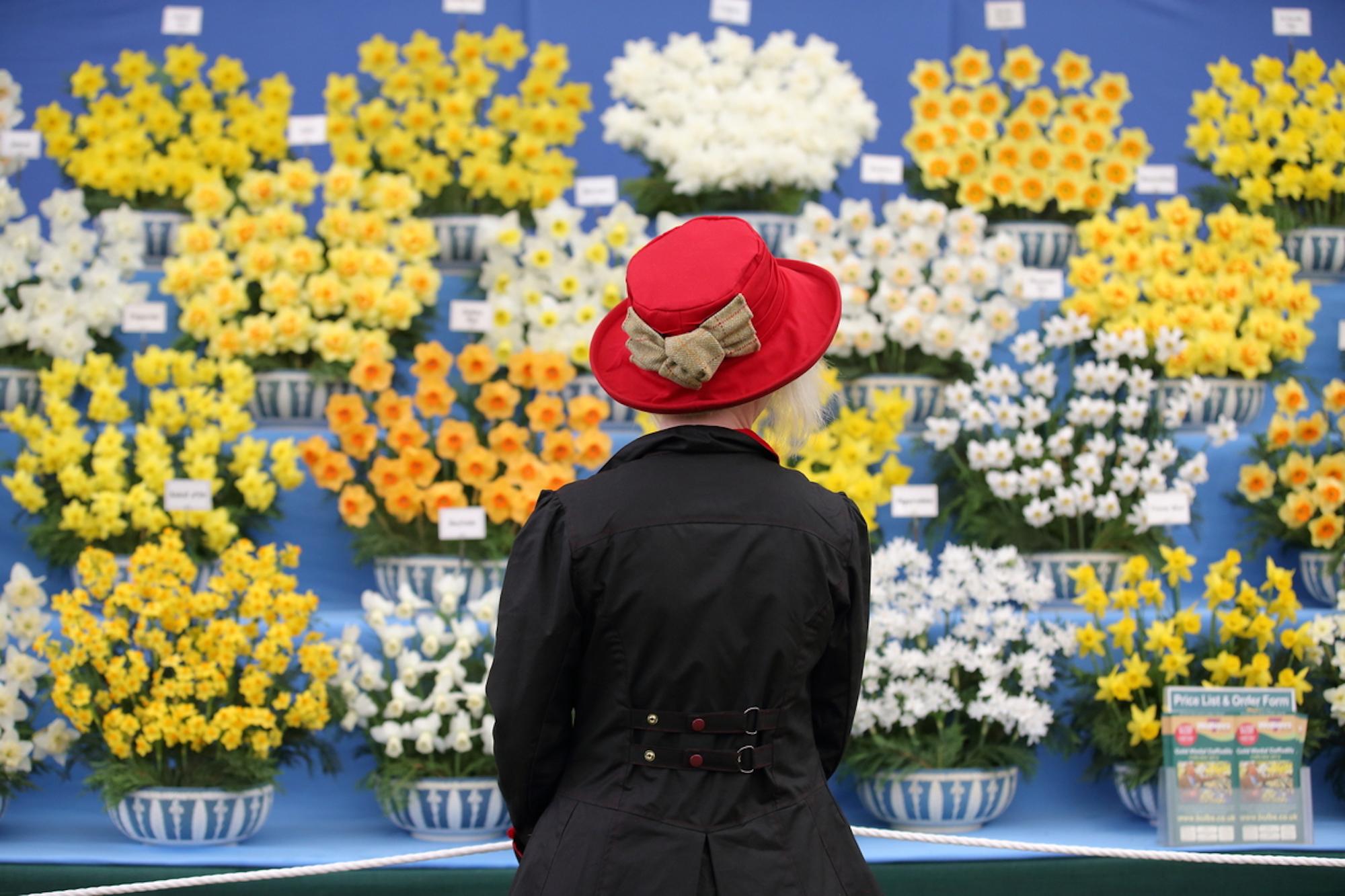 RHS Cardiff Flower Show copyright RHS Justin Tallis