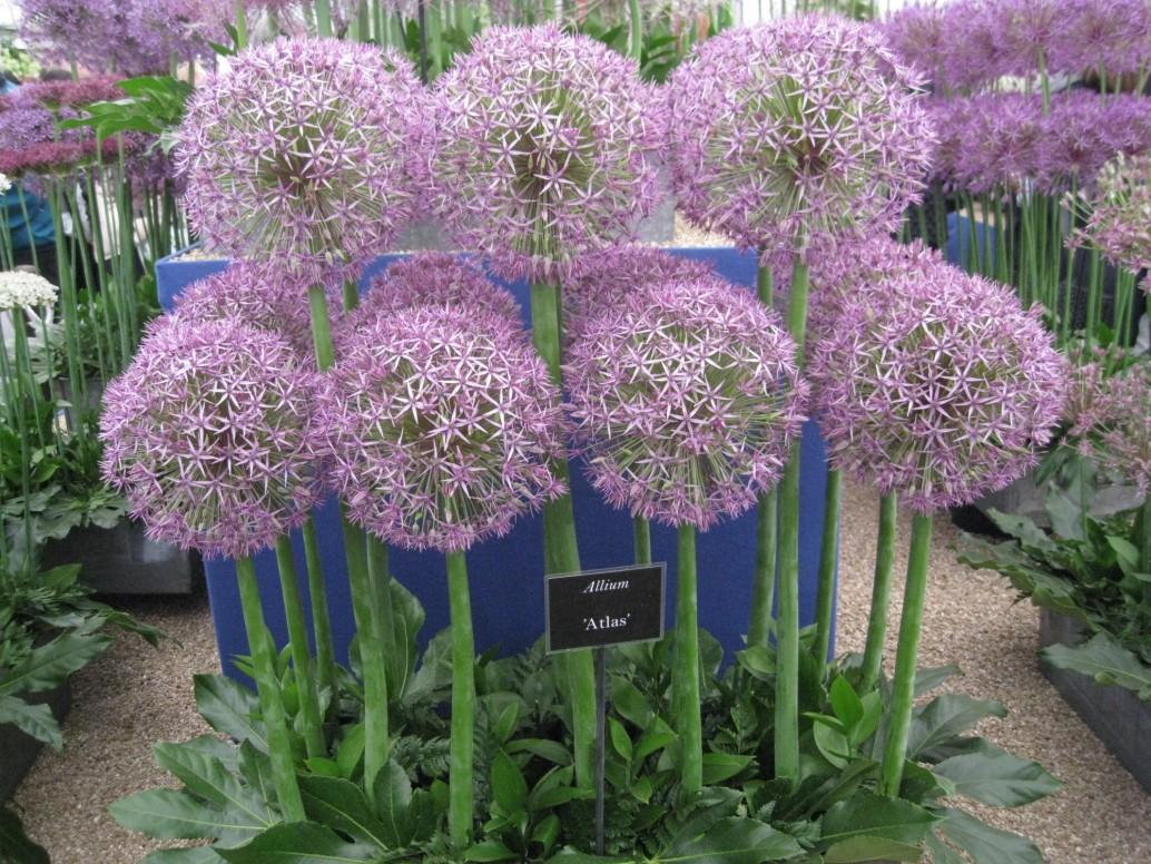 chelsea flower show tour with sisley english garden tours
