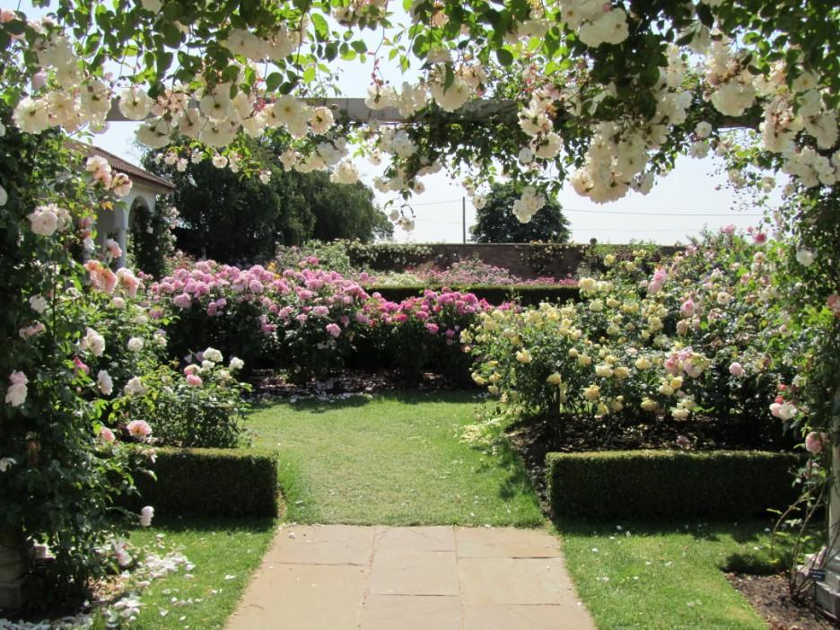 Roses In Garden: Summer Gardens With Hampton Court Flower Show