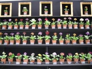 Chelsea Flower Show 2013-2