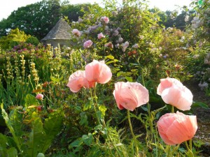 Wyndcliffe Court Gardens, Monmouthshire