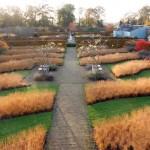 Scampston Walled Garden - North Yorkshire