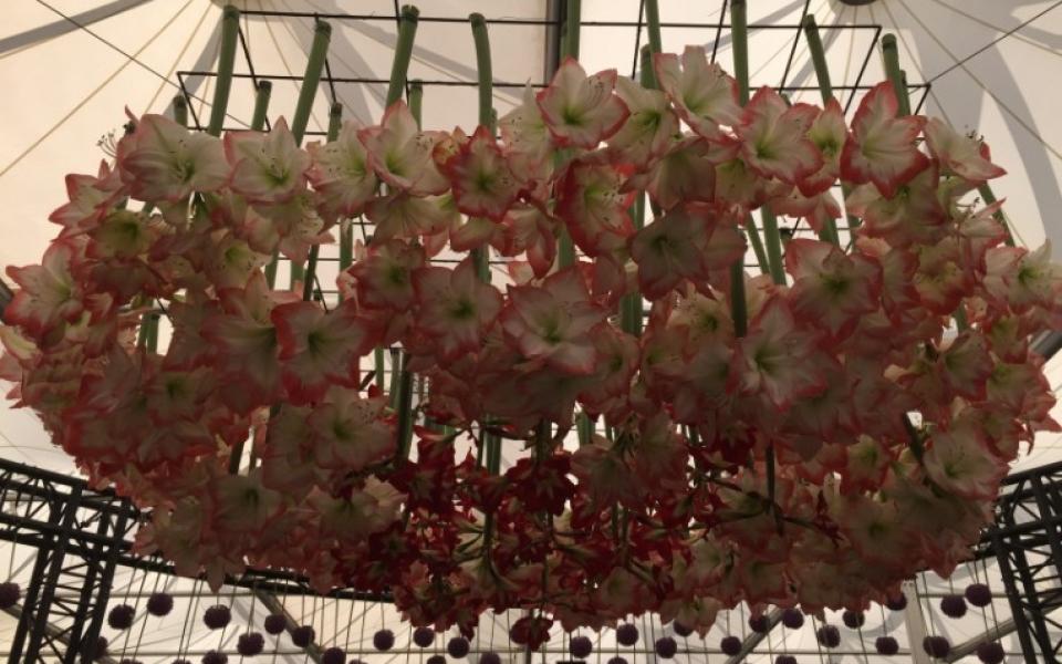 Chelsea Flower Show (130)