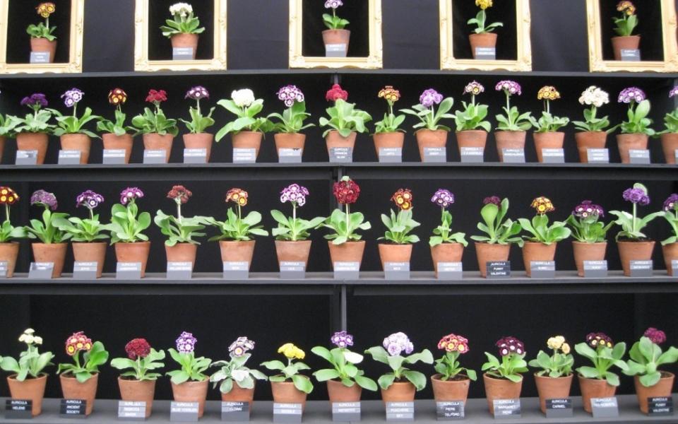Chelsea Flower Show 2013 (330)