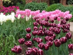 Great Comp Garden, Kent