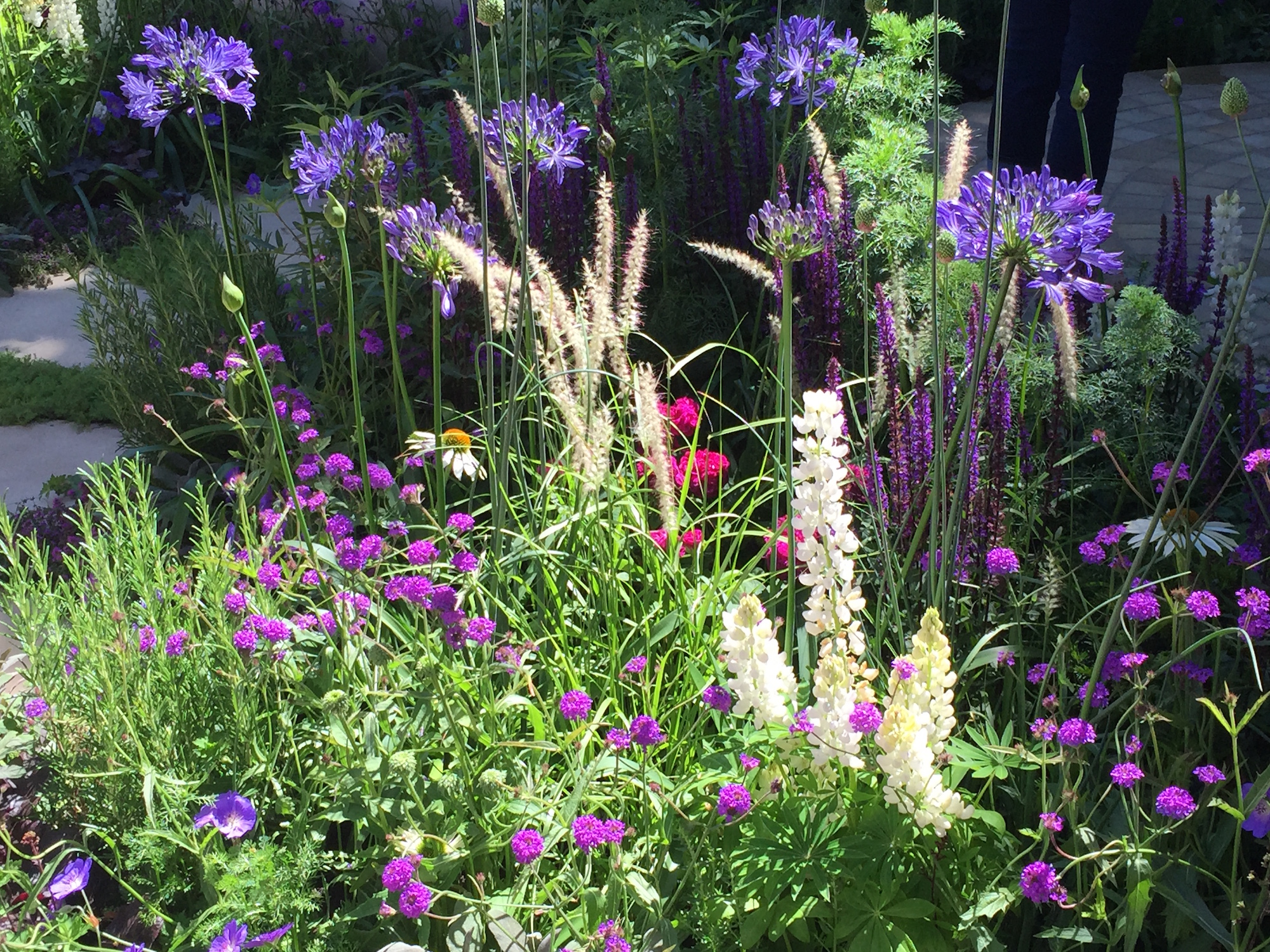 Rhs flower shows 2018 with sisley garden tours - Hampton court flower show ...