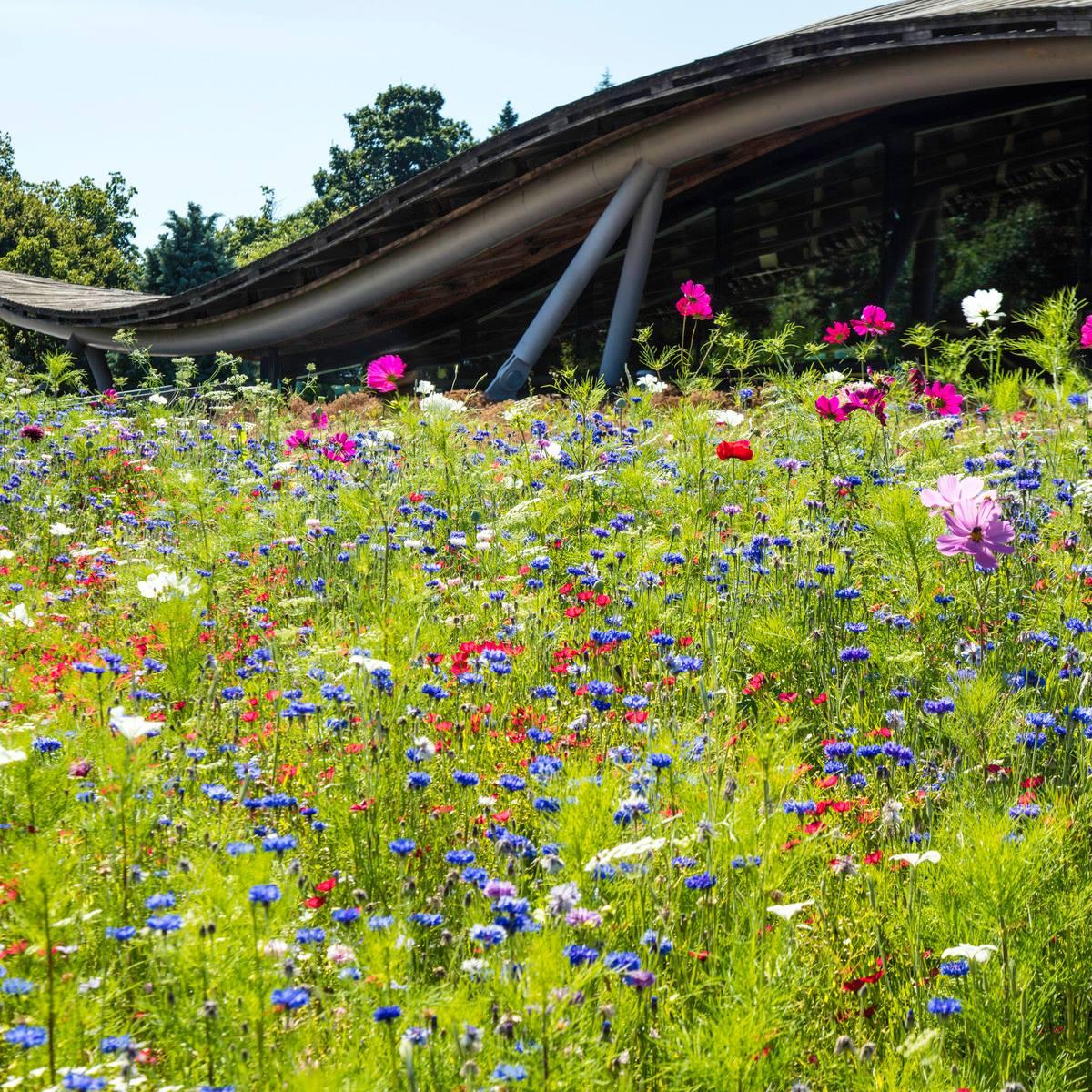 Savill Gardens