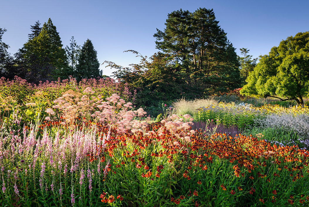 late summer flowers at harlow carr